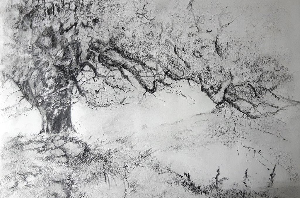 Baum auf dem Grabhügel Hiddensee